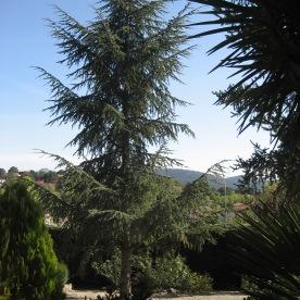Jardin V