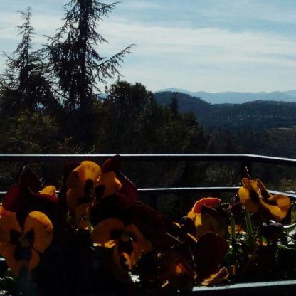 Vista desde el salón de Deo Gratias